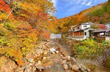 秋天的乳头温泉 四年前来过一次 被这里的温泉和色彩感动 今年特意提前预约好住宿, 因为能住宿的旅馆和