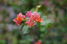 鲜花的美丽,看出人们对家的热爱,对生活的憧憬