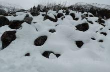 雪的作品纯天然