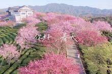 国内超美的樱花园|这是动漫中的场景吧