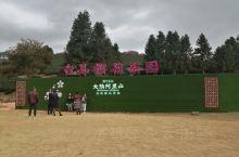 漳平永福台品樱花茶园~是我见过最漂亮的樱花园,规模较大,品种丰富,性价比相当高,有山有水,环境相当不