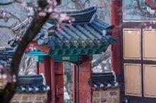 首尔樱花季:景福宫和奉恩寺