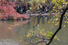 【天平红枫甲天下】国家4A级景区,中国四大赏枫胜地,山地园林建筑典范。本人有幸参加2020年红枫摄影