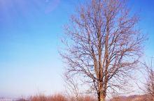 一棵安静的树