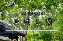 天津丨周末好去处,打卡西沽公园。