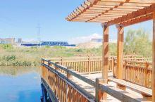 秦王川国家湿地公园|城市之中一副美丽画卷