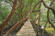 雅加达北区的红树林
