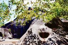塞舌尔,普拉兰岛的龟山,树叶在上面投下的影子、就像画上去的一样,路遇的一只小狗,一路跟到海边