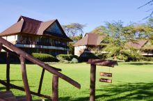 肯尼亚的庄园,积木一样的房子,田园诗般的景色。清晨,白鸛在散步,不避人