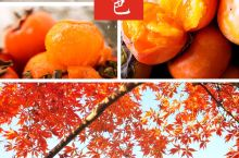 婺源最美秋景厚塘庄园色彩斑斓的秋天