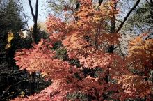 美丽的家乡蛟河市白石山林区的风景如画纯自