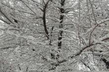 小    雪