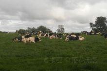 爱尔兰野外风光