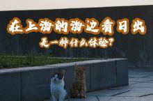 上海海边日出攻略‖以大都市形象存在于人们印象里的上海,除了摩天大楼还是摩天大楼,如果你审美疲劳了,今