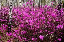 加格达奇魅力原始大森林