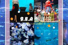 新加坡圣淘沙名胜世界S.E.A水族馆