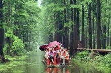 李中水上森林位于兴化城西北17公里处,是全省最大的人工湿地生态林,都市人回归自然休闲的天然氧吧。整个