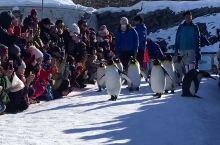 旭山动物园打卡