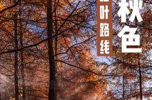 国庆之后,西安周末赏红叶最美路线