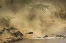 肯尼亚独有的动物大迁徙 动物的王国