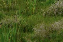 让人瞬间宁静的北海湿地