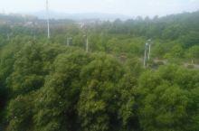 乡间小道,绿树成荫,满满都是负离子氧气,希望每天都能生活在这里。
