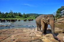 探访世界上第一所大象孤儿院