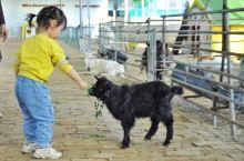 自从田园风流行起来后,好多农业公司转型旅游搞起了牧场农场来。给大家推荐一个非常全面的牧场——齐河牧羊