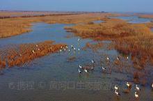 黄河口观鸟秘境