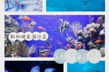 新加坡圣淘沙岛的海底之窗寻幽探秘之旅