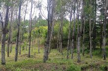 东北的森林