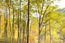 我想把最美的东西送给你,天然画廊,再过几日如同大自然的秋天的画卷。#治愈系风景 #四川美好推荐官 #