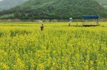 通化集安的万亩油菜花海还可以。
