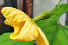 花与果相互辉映
