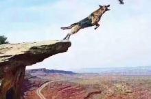 若没有飞翔的能力,就应该控制住自己的欲望,有些东西看似很诱人,但未必适合你。没有收拾残局的能力,就别