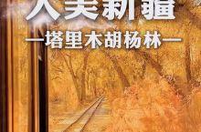 坐火车游胡杨林,绝了