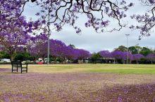 澳洲布里斯班市新农庄公园