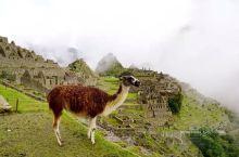 秘鲁,行走200个国家