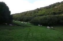 已进入草原最美的季节……