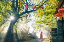 秋天,我们去趟腾冲吧,在银杏树下许个愿