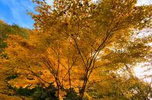 广岛百万赏红叶秘境地「帝释峡」