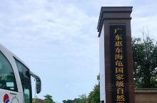 """这是位于惠东县的一个国家级海龟保护区,也是传说中的""""惠州版小垦丁""""。这里的海很蓝,海天一色,惊涛拍岸"""