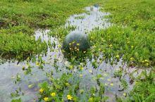 🌟亮点特色: 夏天的草原,风景宜人……