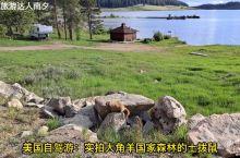 美国自驾游:实拍大角羊国家森林的土拨鼠,生活在湖边石头缝里