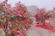 燕儿谷景区花叶