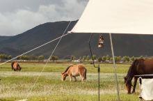 找一家帐篷民宿,夜晚住在牛群和马群中间
