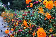 老家的路边经过整理,老乡们洒下了各种鲜花种子,国庆节肆意盛开,美不胜收!