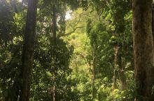 超爱的热带雨林和超赞的民宿推荐