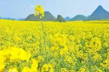 万亩花田如画卷,邀请你来到春天!