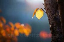 秋季游甘肃必去的5大景点,去一次终身难忘